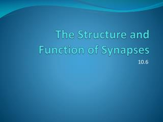 The Structure and Function of Synapses