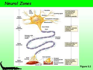 Neural Zones