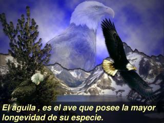 El  guila , es el ave que posee la mayor longevidad de su especie.