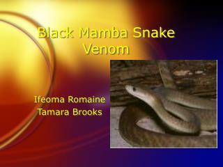 black mamba snake venom