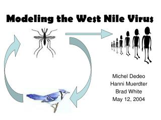 Modeling the West Nile Virus