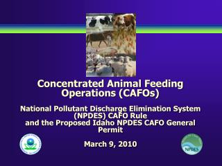Concentrated Animal Feeding Operations CAFOs  National Pollutant Discharge Elimination System NPDES CAFO Rule and the Pr