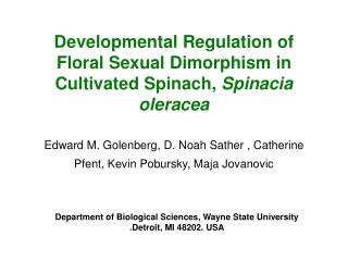 Developmental Regulation of Floral Sexual Dimorphism in Cultivated Spinach, Spinacia oleracea
