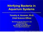 nitrifying bacteria in aquarium systems