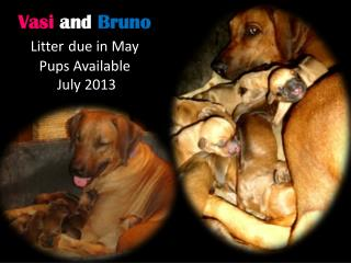 Vasi and Bruno  Litter due in May  Pups Available   July 2013