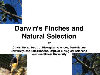 Darwin s Finches and Natural Selection