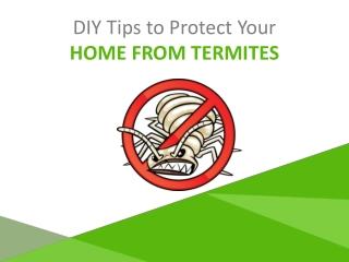 Termite Control Adelaide – Eco-Friendly Pest Treatments