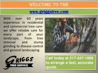 Tree Doctor Indianapolis- Emergency Tree Removal