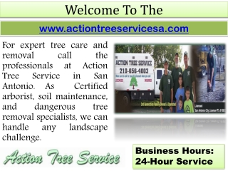Tree Doctor San Antonio – Commercial Tree Care- Tree Removal