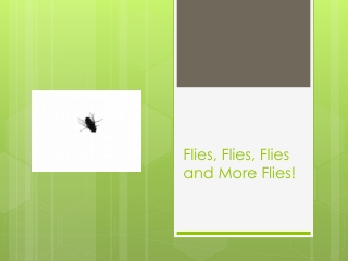 Flies, Flies, Flies and More Flies