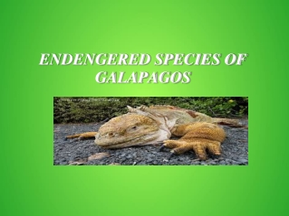 Endengered Species Of Galapagos