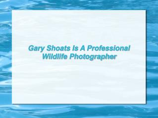 Gary Shoats Is A Professional Wildlife Photographer