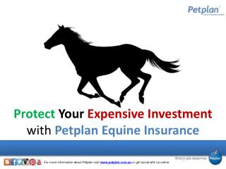 Protect Your Expensive Investment with Petplan Equine Insura