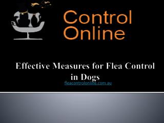Effective Measures for Flea Control in Dogs