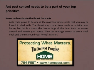 Ant pest control needs to be a part of your top priorities