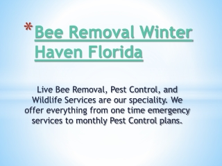 Bee Removal Long Wood Florida