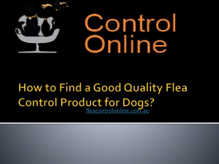 How to Find a Good Quality Flea Control Product for Dogs