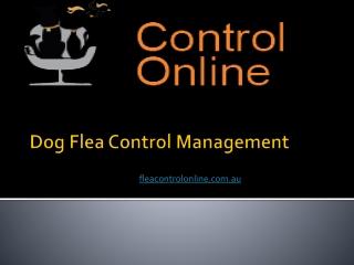 Dog Flea Control Management