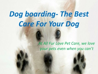 Dog boarding- The Best Care For Your Dog