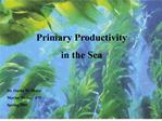 primary productivity  in the sea