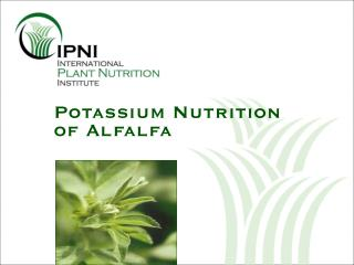 potassium nutrition of alfalfa