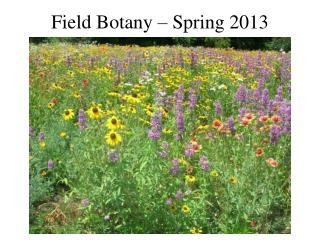 field botany   spring 2008