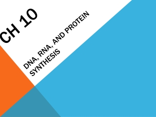 Ch 10 DNA, RNA, and Protein Synthesis