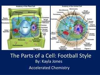The Parts of a Cell: Football Style