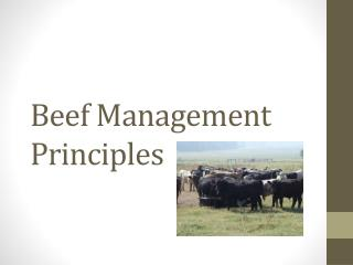 Beef Management Principles