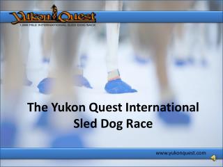 The Yukon Quest International Sled Dog Race