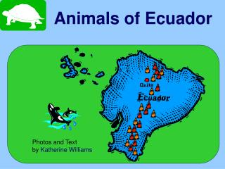 animals of ecuador