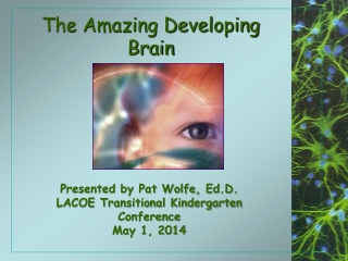 The Amazing Developing Brain
