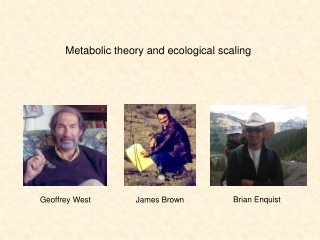 Metabolic theory  and  ecological scaling