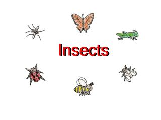 Insects Insects Insects have 6 legs.