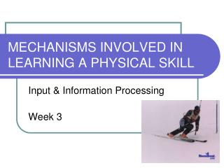 MECHANISMS INVOLVED IN LEARNING A PHYSICAL SKILL