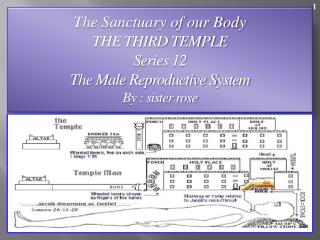 The Sanctuary of our Body THE THIRD TEMPLE Series 12   The Male Reproductive System  By : sister rose