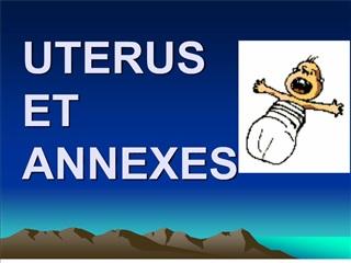 uterus et annexes