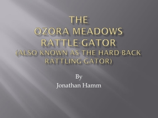 The  OzorA  meadows Rattle-gator (also known as the hard-back rattling-Gator)