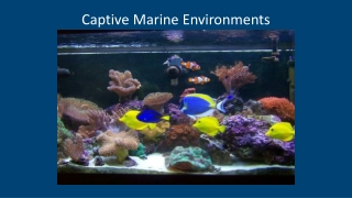 Captive Marine  Environments