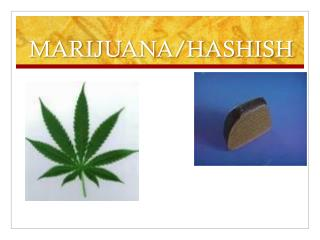 MARIJUANA/HASHISH