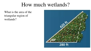 How much wetlands?