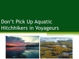 Don't Pick Up Aquatic Hitchhikers in Voyageurs