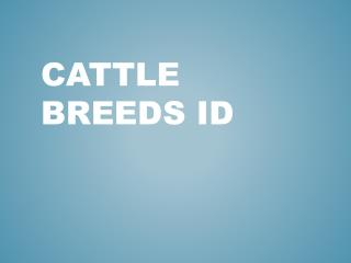 Cattle Breeds ID