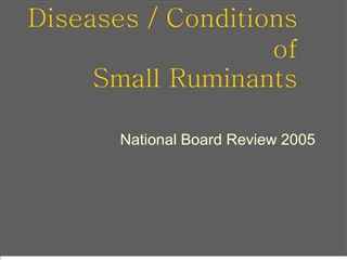 diseases  conditions of small ruminants