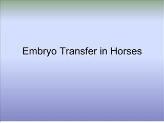 embryo transfer in horses