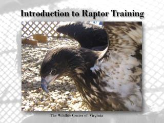 Introduction to Raptor Training