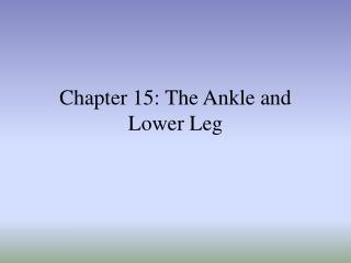 chapter 15: the ankle and lower leg