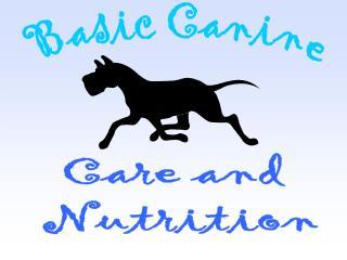 Basic Canine