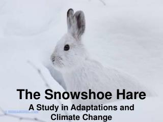 The Snowshoe Hare A Study in Adaptations and Climate Change