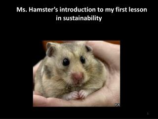 A  Ms. Hamster�s introduction to my first lesson in sustainability